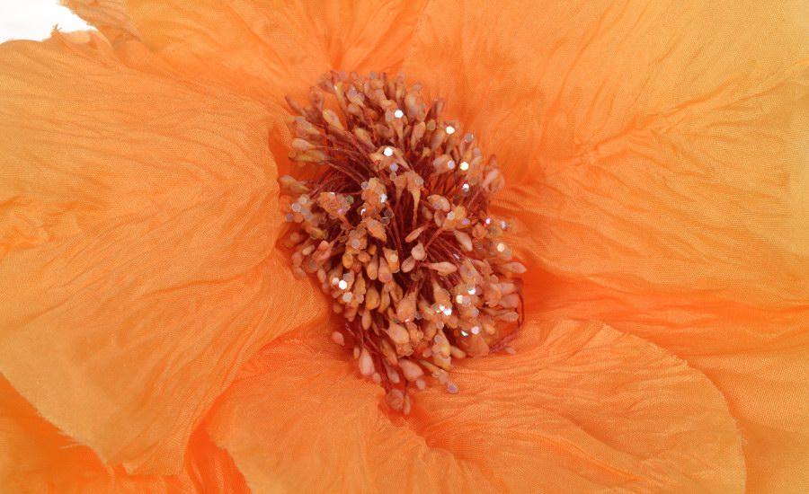 Fleur orange detail